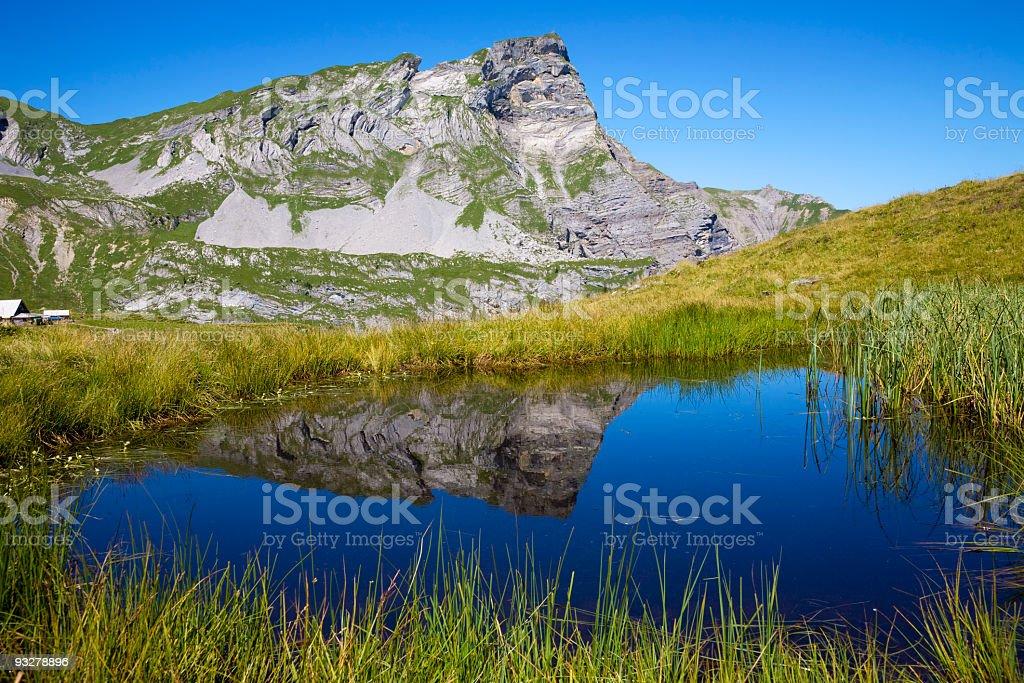 Teich stock photo