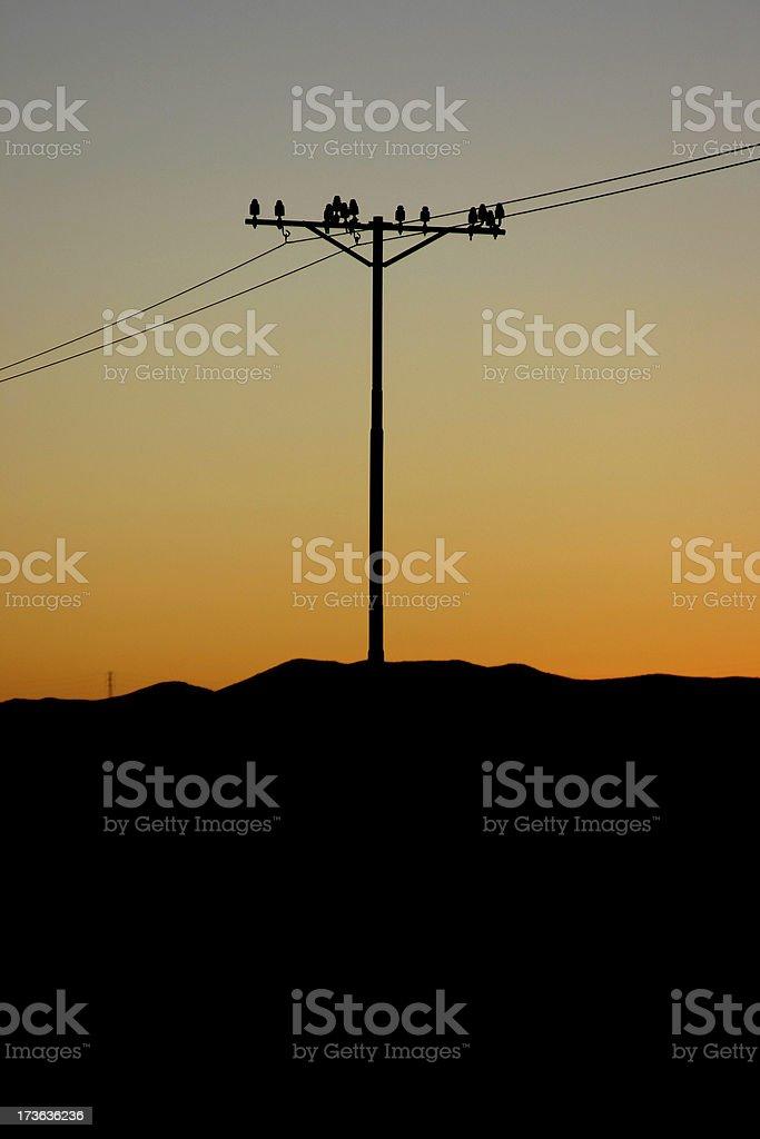 Telegraph Pole 13 stock photo