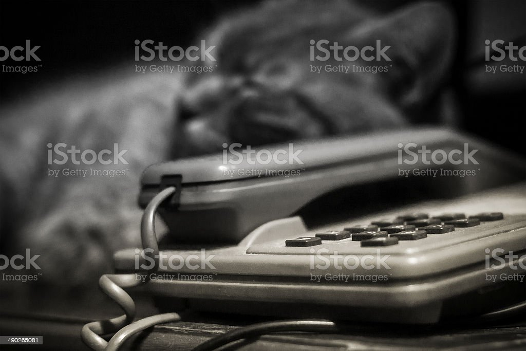 Telephone and a cat royalty-free stock photo