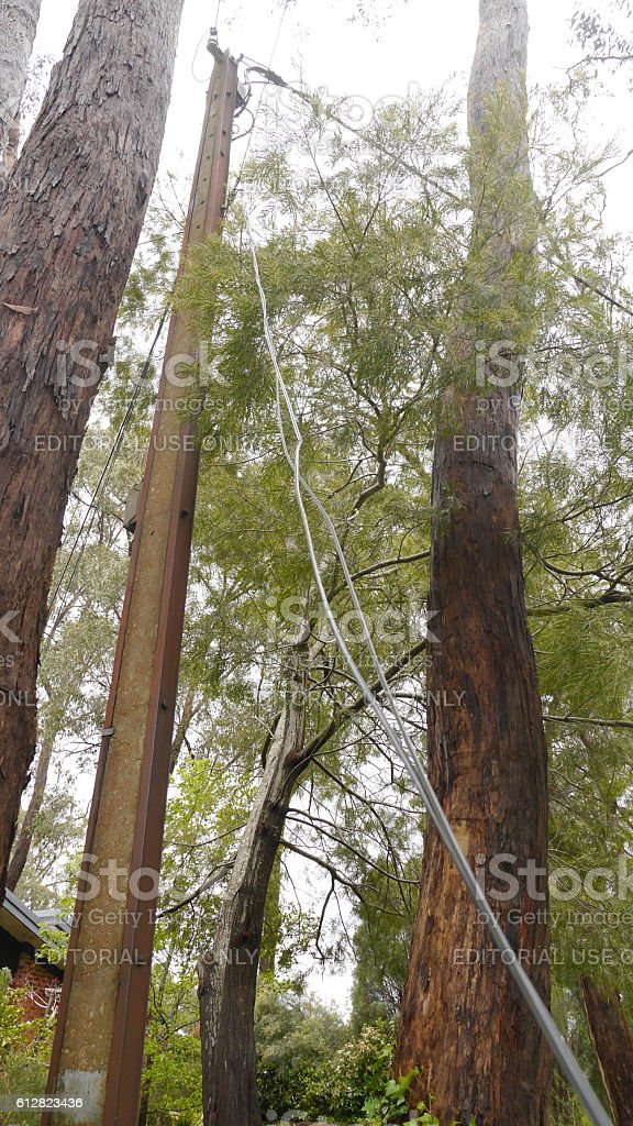 Telephone line severed by fallen tree stock photo