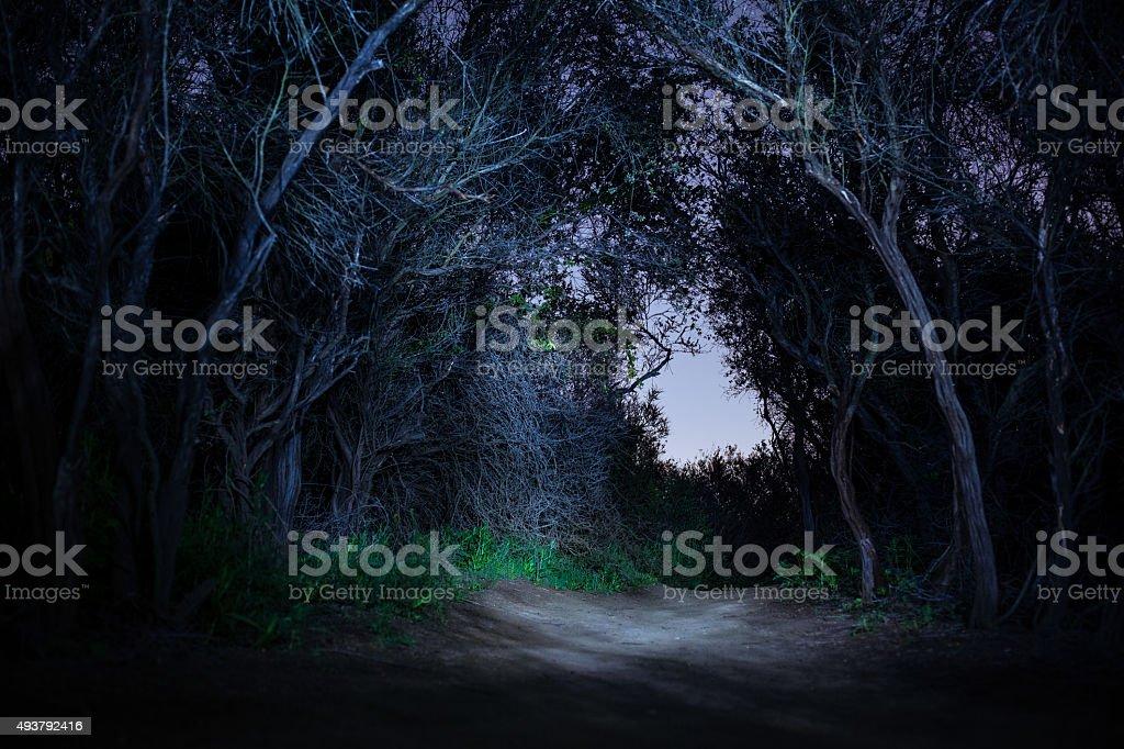 Temescal Ridge Trail Chapparel Tunnel At Night royalty-free stock photo