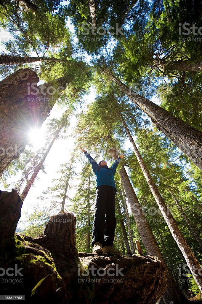 Temperate Rain Forest royalty-free stock photo