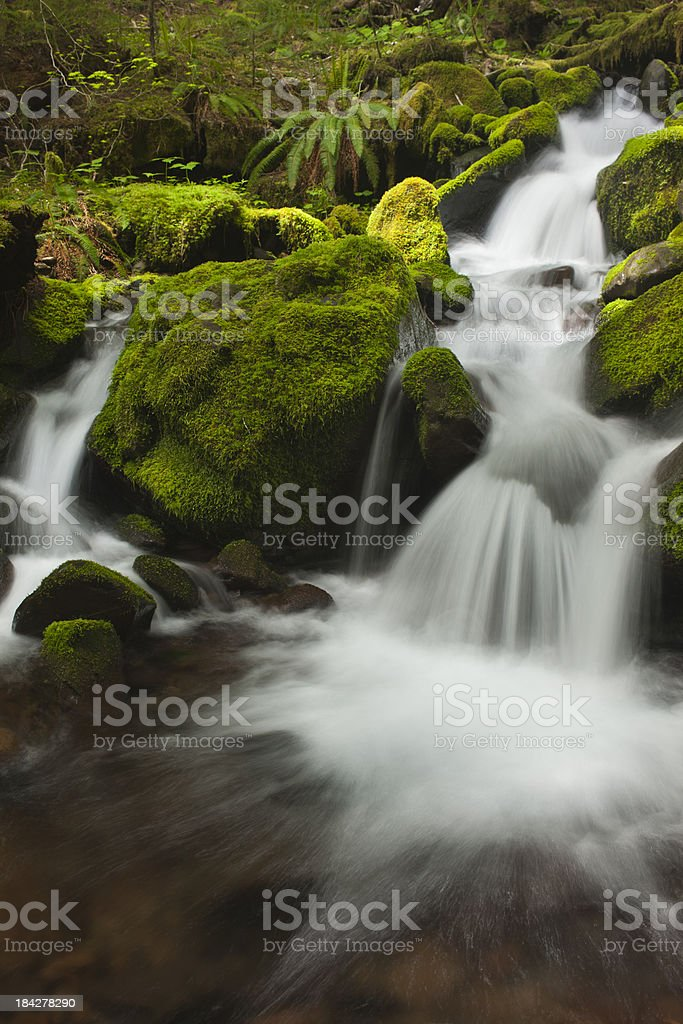 Temperate Rain Forest Waterfall royalty-free stock photo