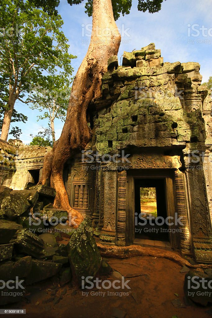 Temple Courtyard With Strangling Fig stock photo
