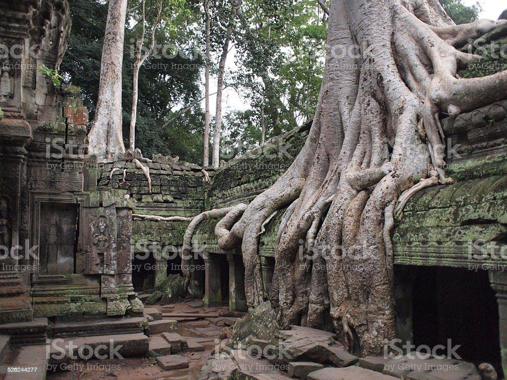 temple ruins at Angkor stock photo