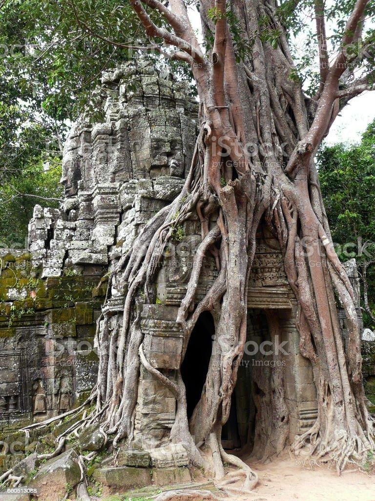Temple ruins in Angkor Wat, Camboida stock photo