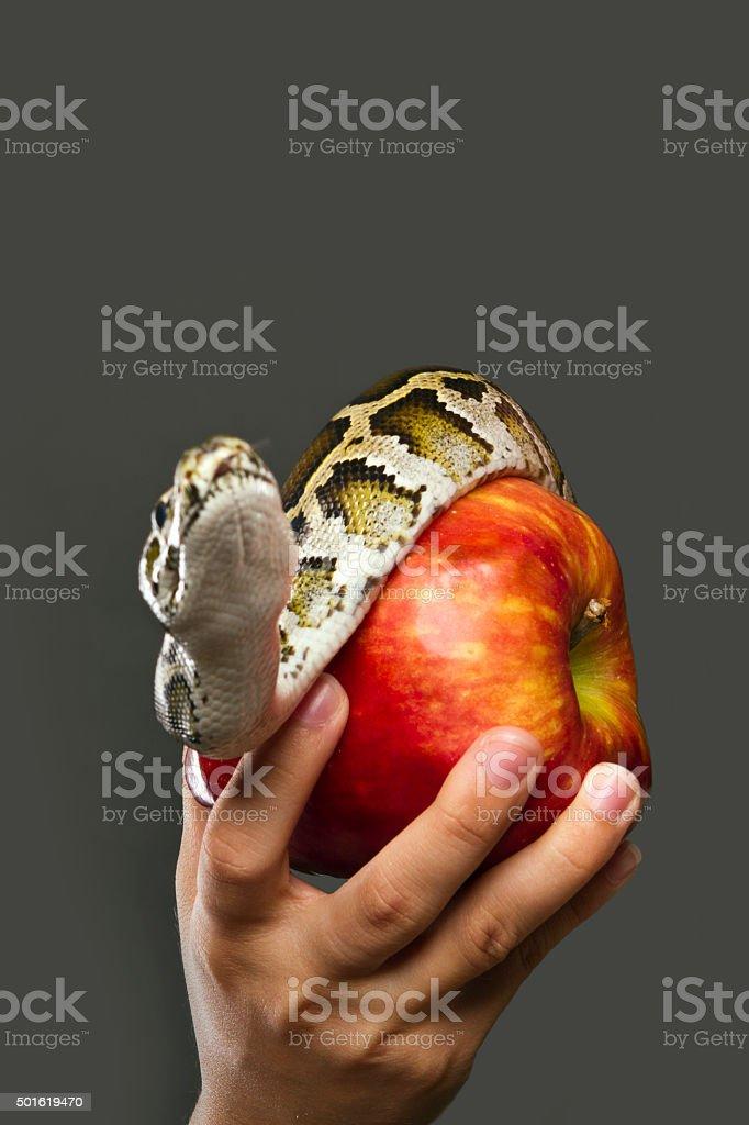 Temptation royalty-free stock photo