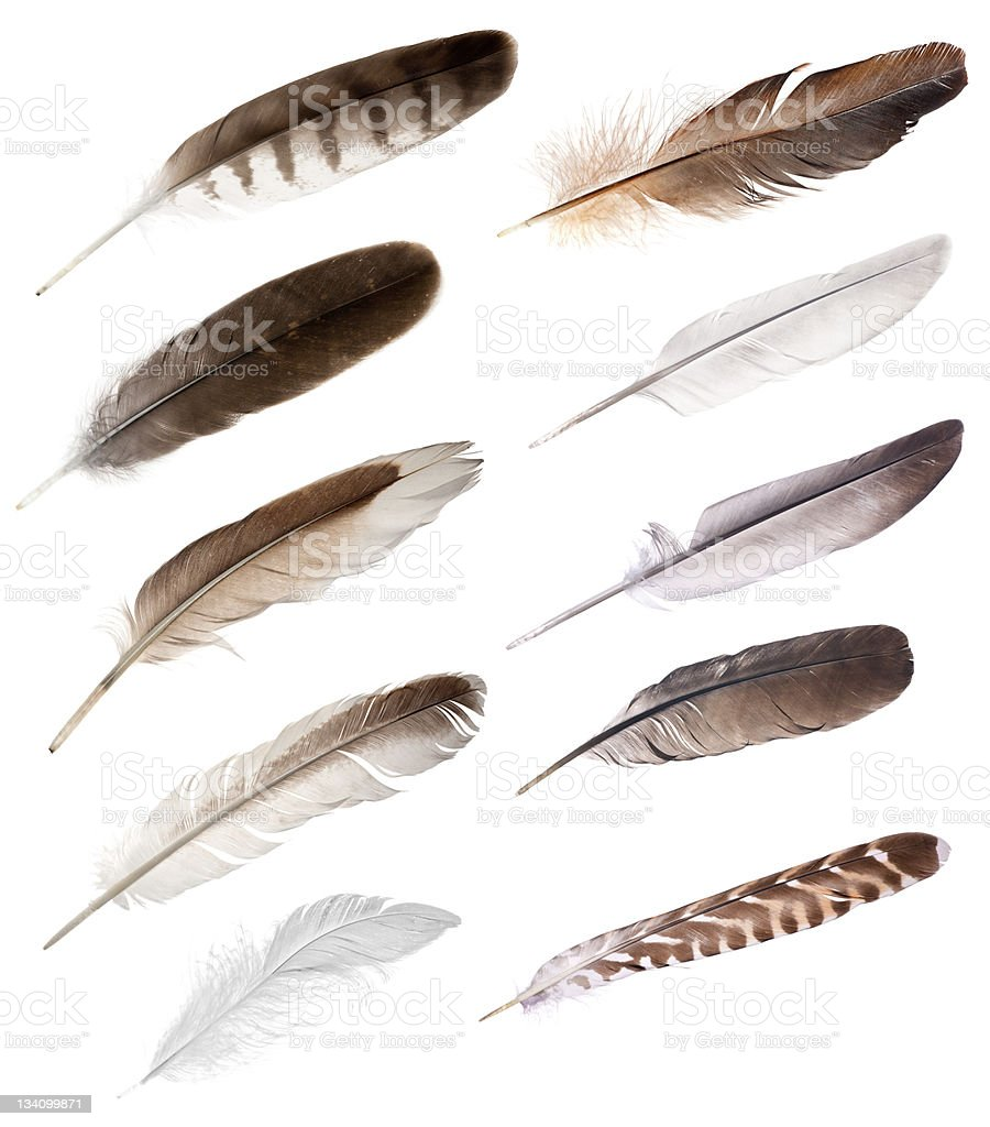 ten feathers from different birds stock photo