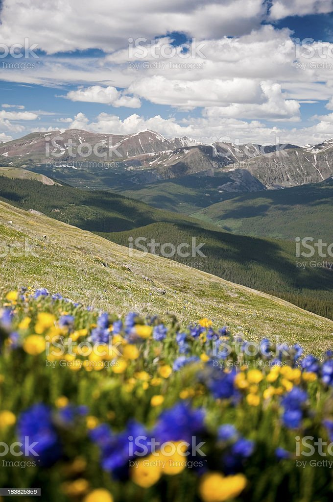 Ten Mile Range and Mountain Wildflowers stock photo