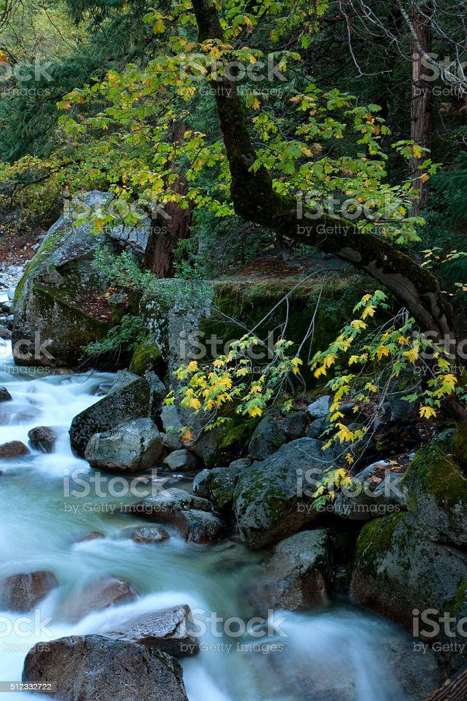 Tenaya Creek royalty-free stock photo