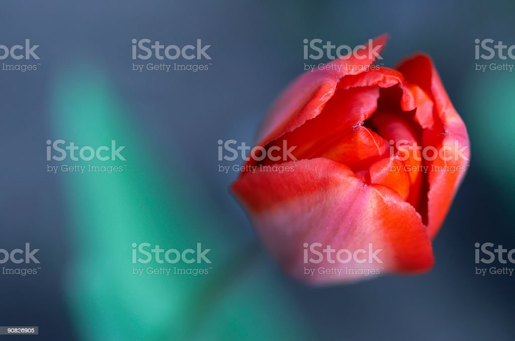 tender new life royalty-free stock photo