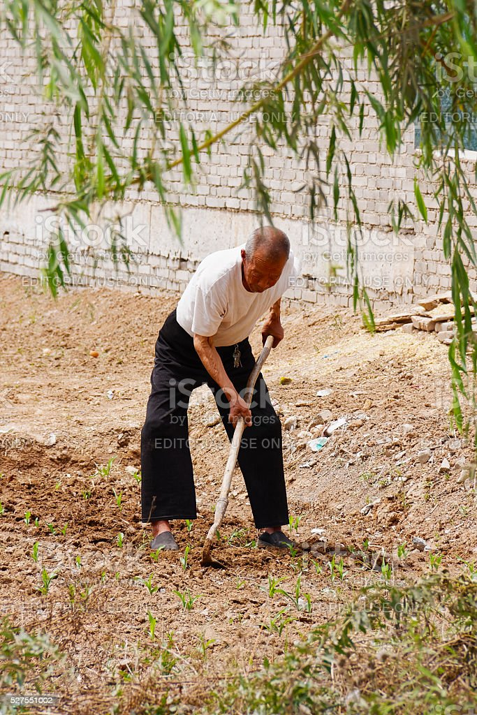 Tending the crops stock photo