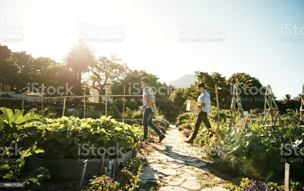 Tending to the season's crops stock photo