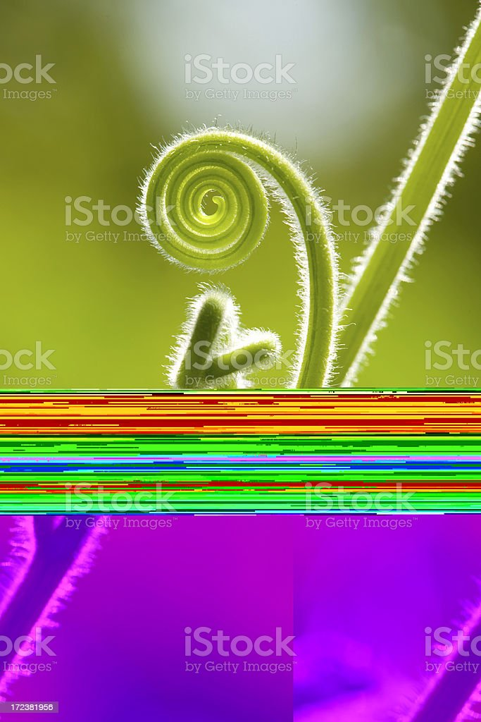tendril royalty-free stock photo
