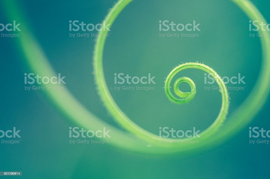 Tendril stock photo