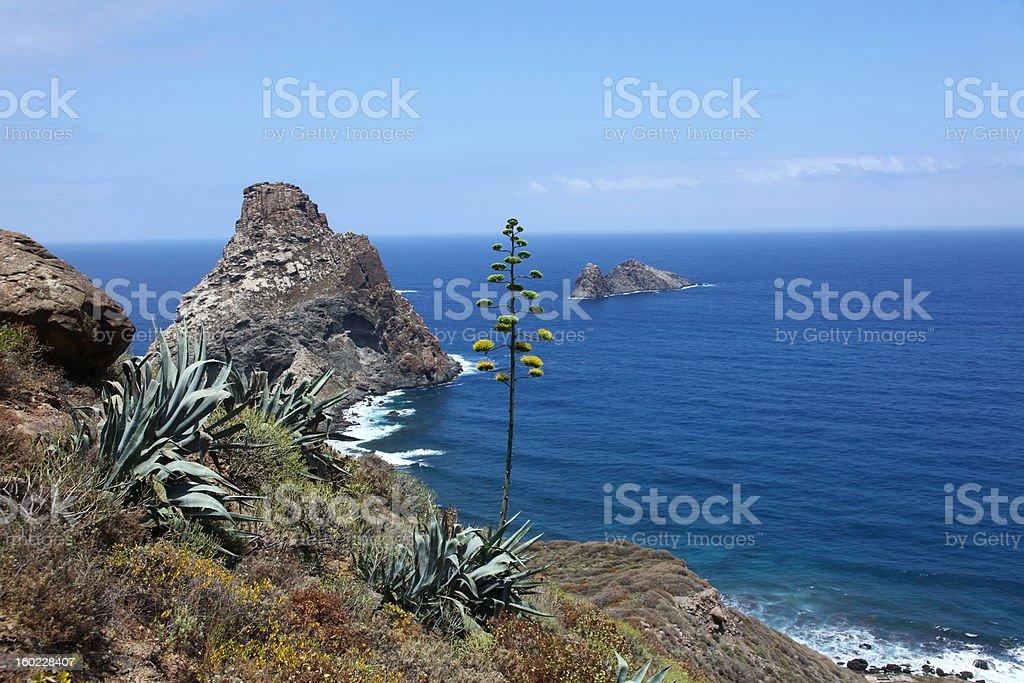 Tenerife's rugged north coast royalty-free stock photo