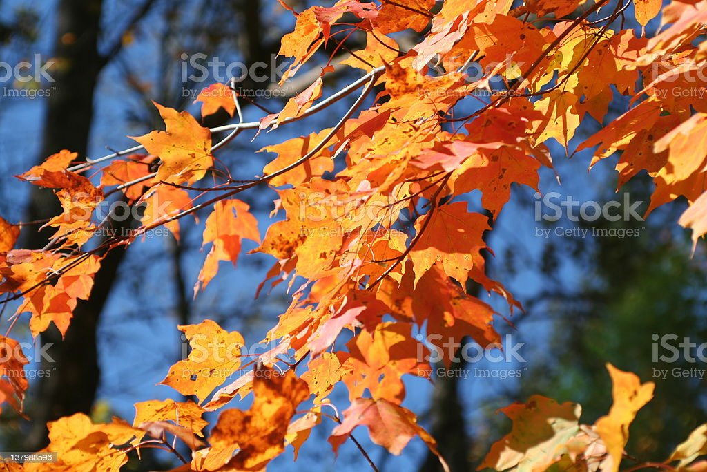 Tennessee Autumn royalty-free stock photo