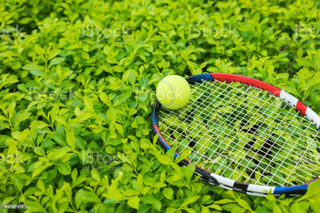 Tennis ball and racket on green leaf background stock photo