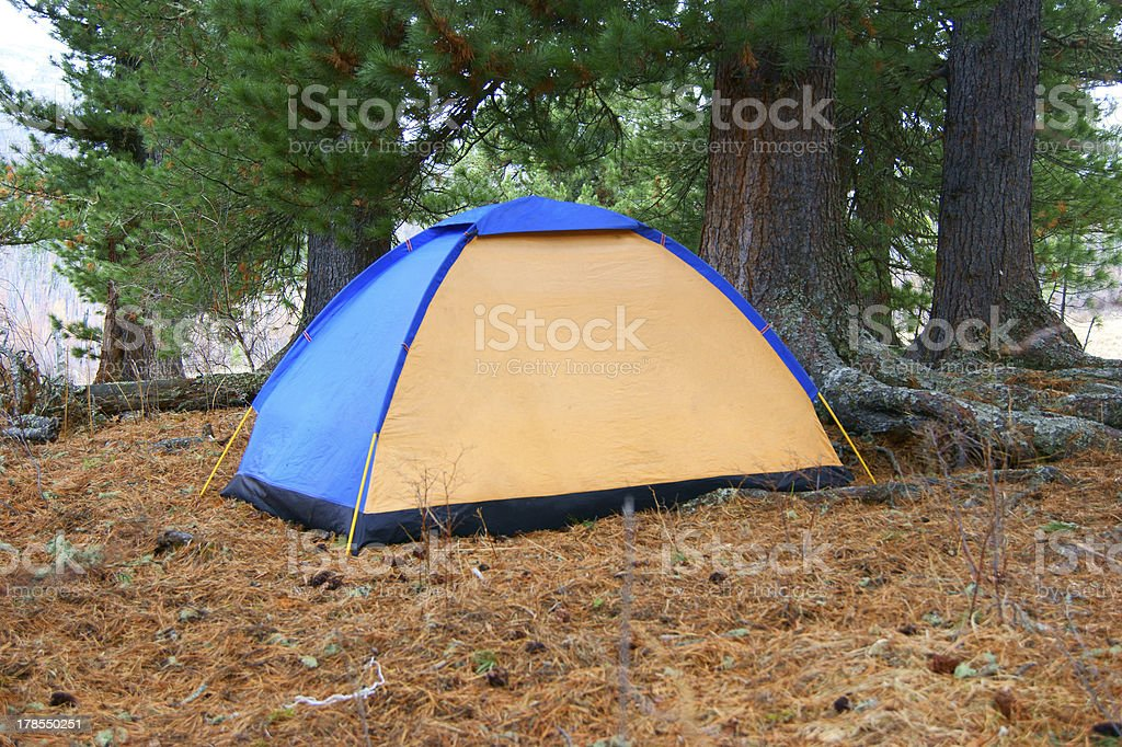 Tent in coniferous wood royalty-free stock photo
