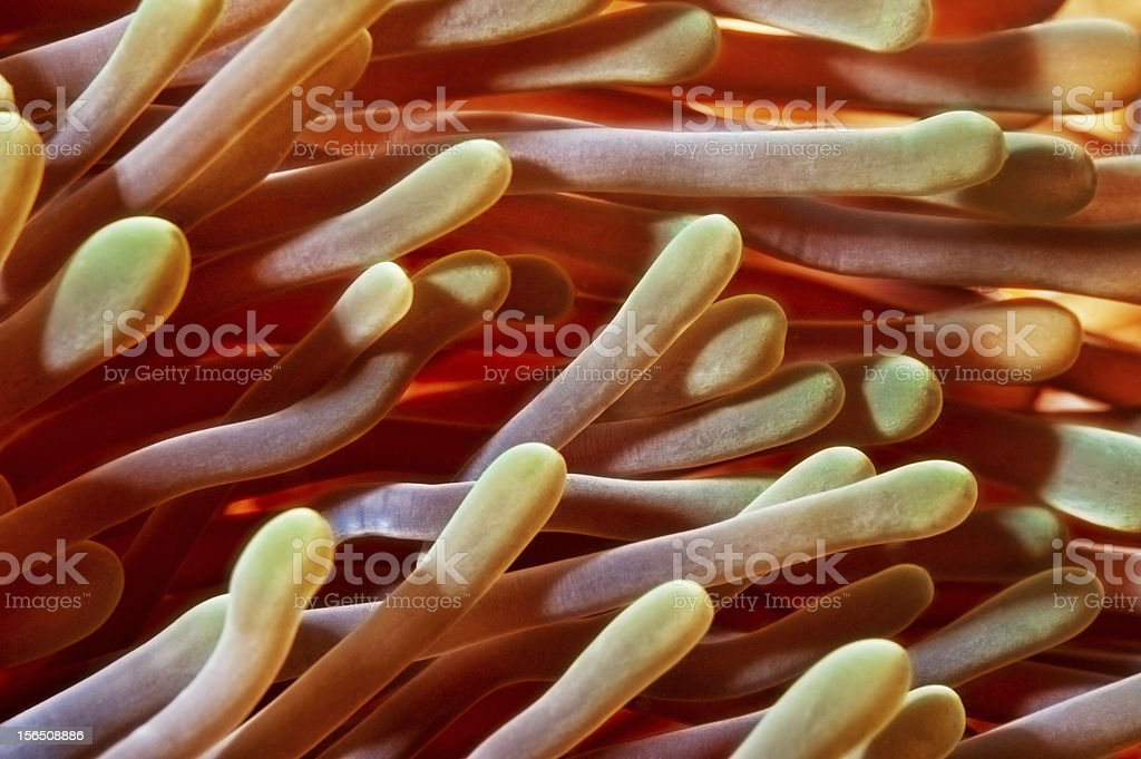 Tentacles royalty-free stock photo