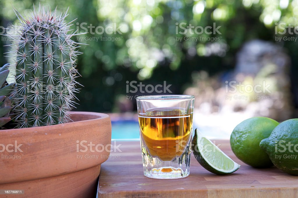 Tequila shot with limes and a cactus. stock photo