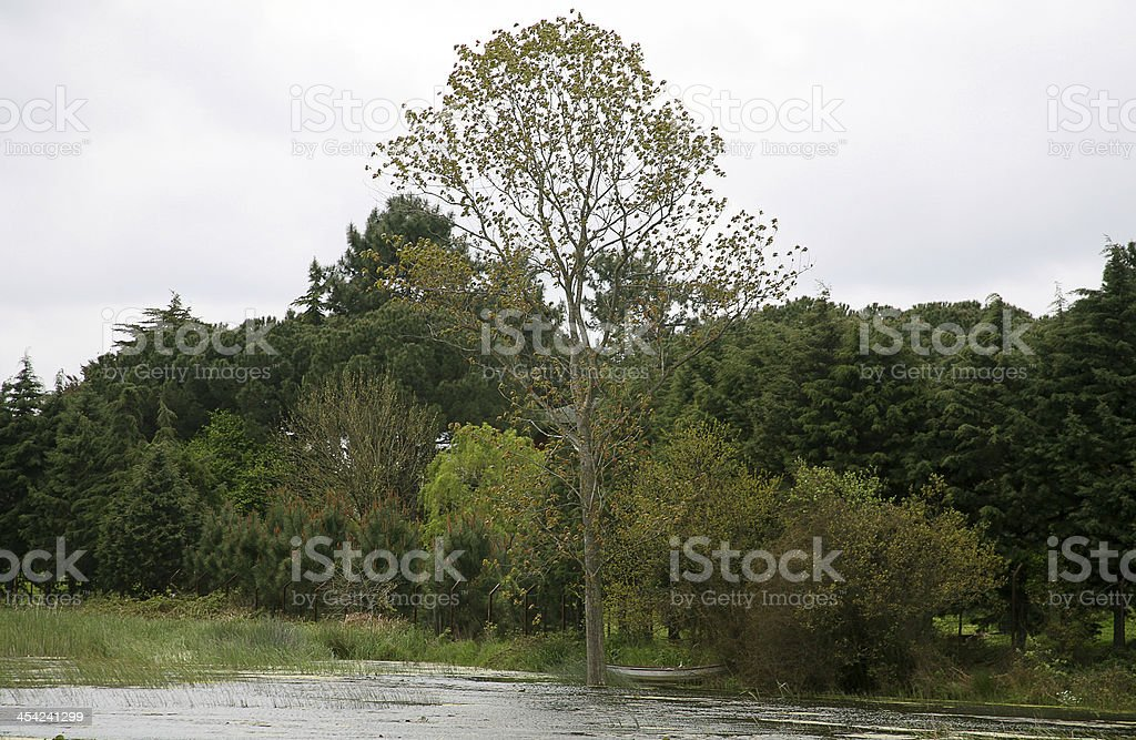 terkos lake royalty-free stock photo