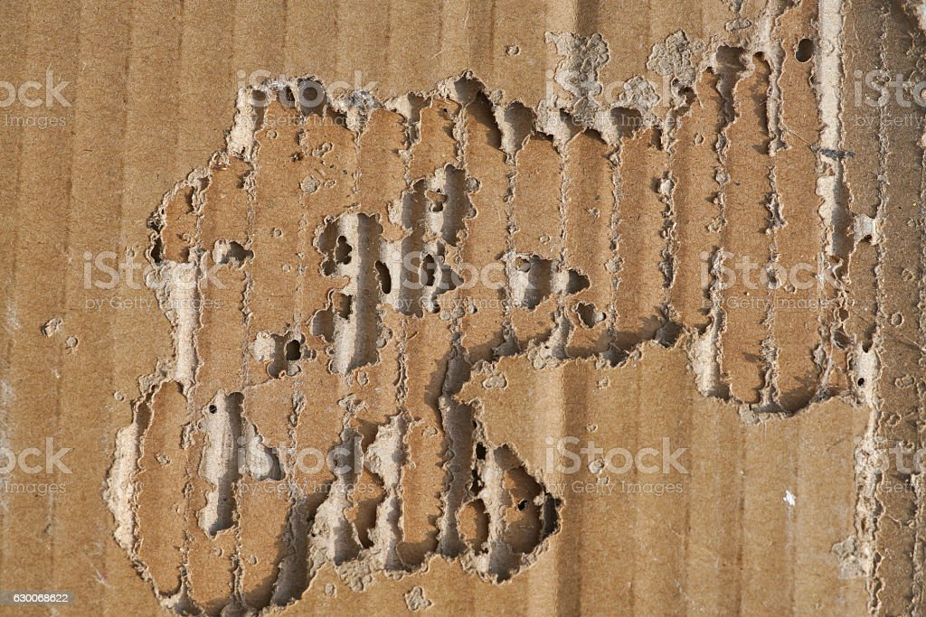 termite damage on corrugated paper box royalty-free stock photo