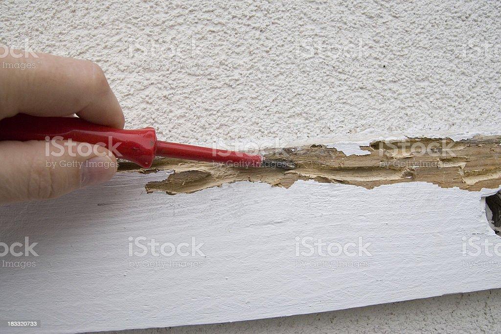 Termite Damage stock photo