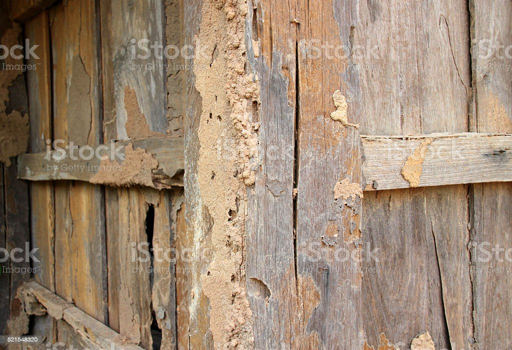 Termite damage wooden wall stock photo