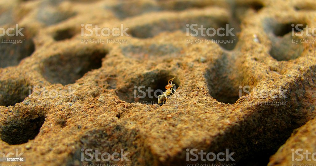 Termite guarding the colony stock photo