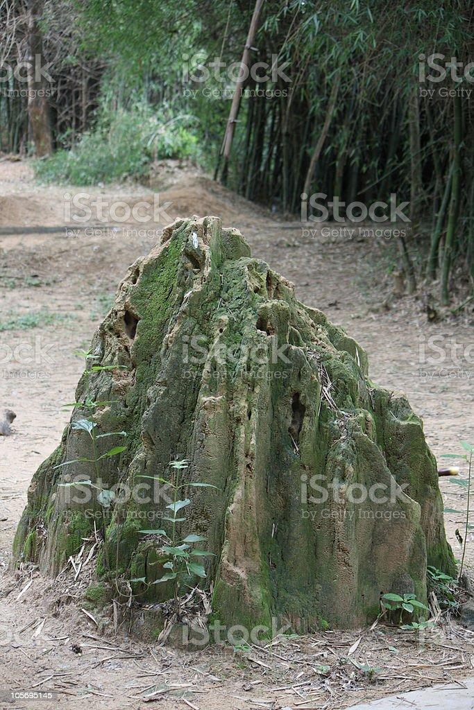 Termite hill stock photo