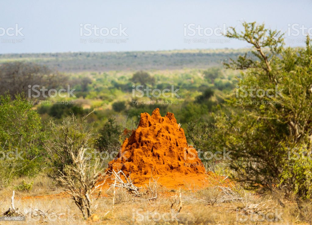 Termite house. Tsavo East National park, Kenya. stock photo
