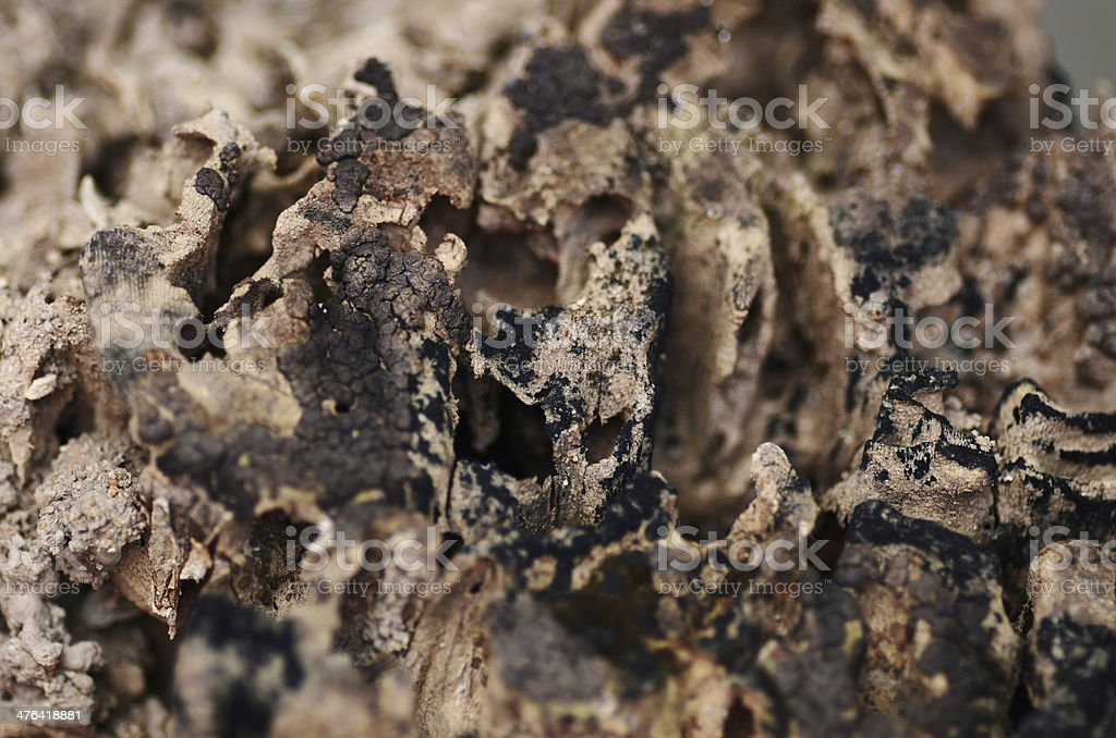 Termite infested wood close up royalty-free stock photo