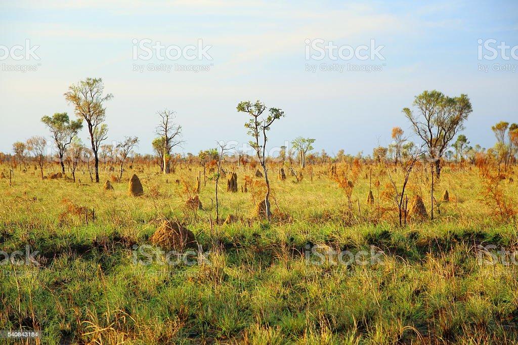 Termite landscape in Australia stock photo