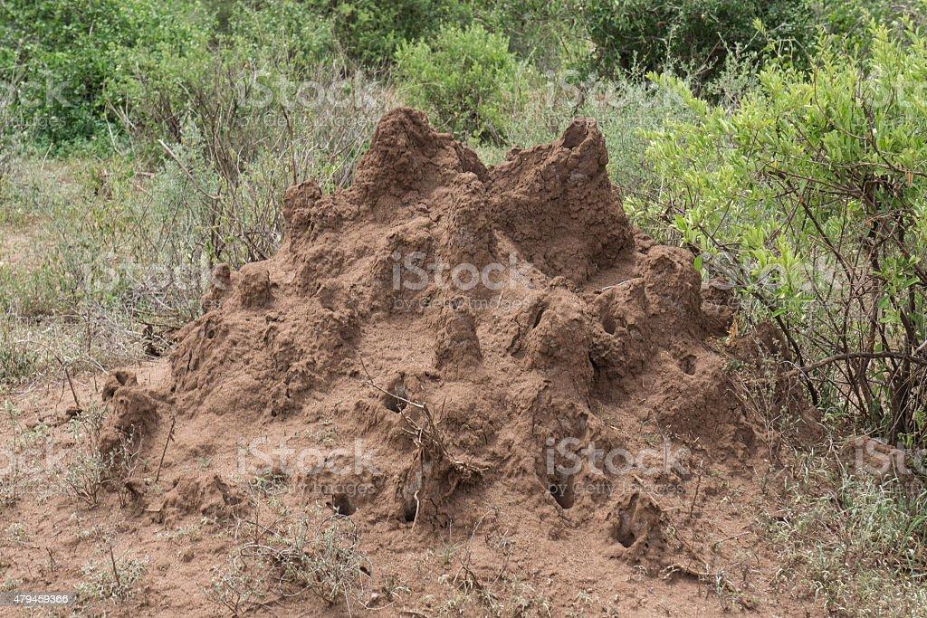 Termite mound in Serengeti stock photo