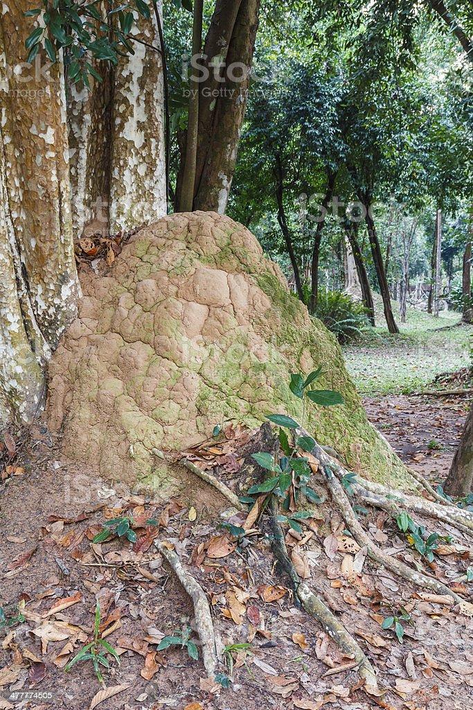Termite mound royalty-free stock photo