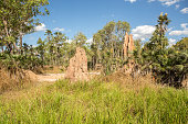 Termite mounds in the Litchfield National Park, Northern Territories, Australia