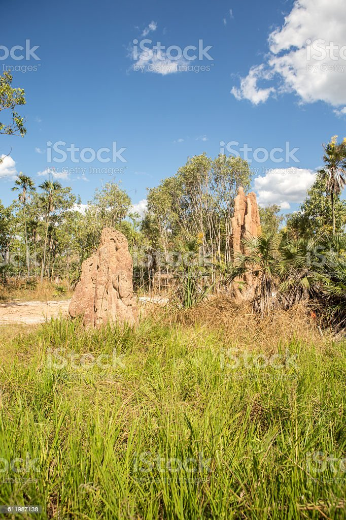 Termite mounds in the Litchfield National Park, Northern Territories, Australia stock photo