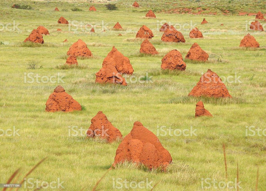 termite mounds. stock photo