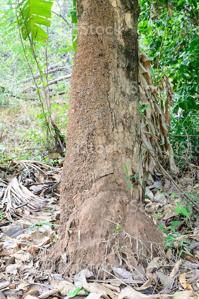 Termite Nest made from soil under the tree stock photo