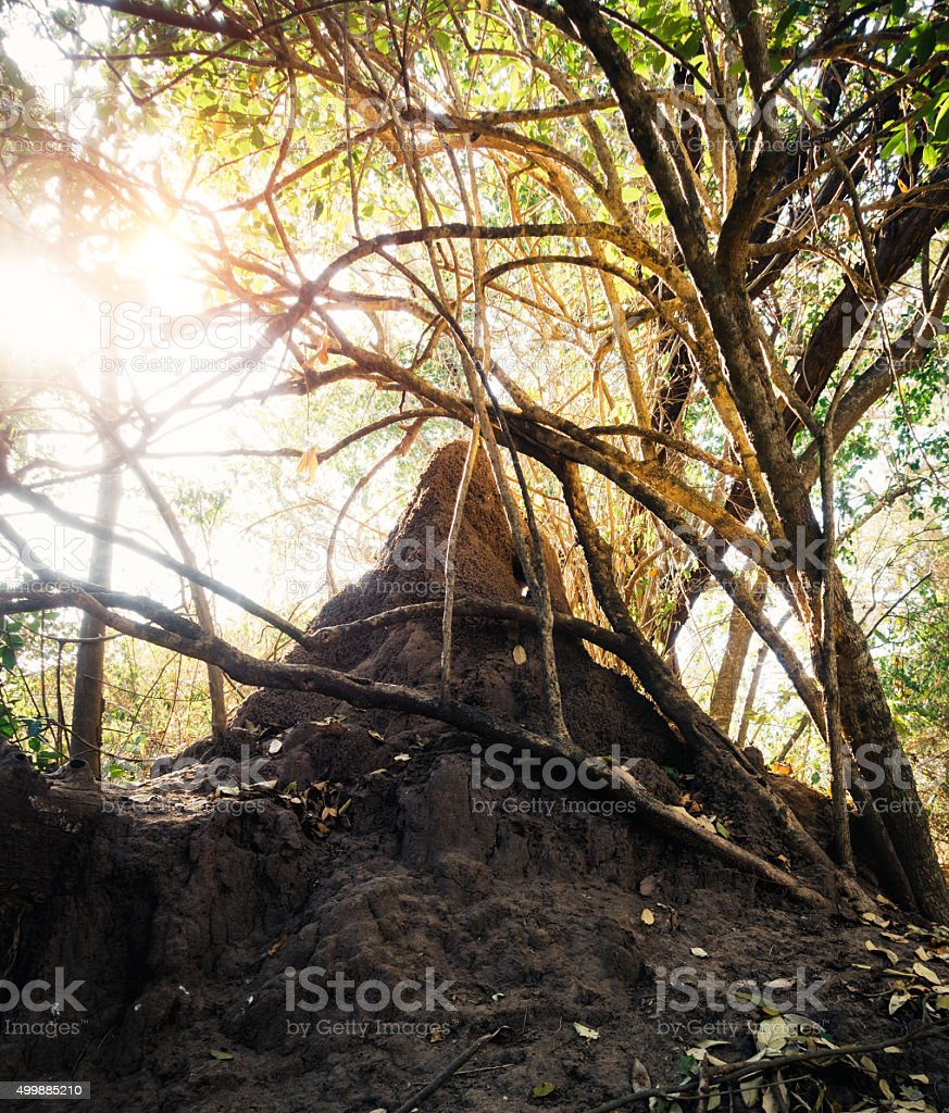 Termite Nest stock photo