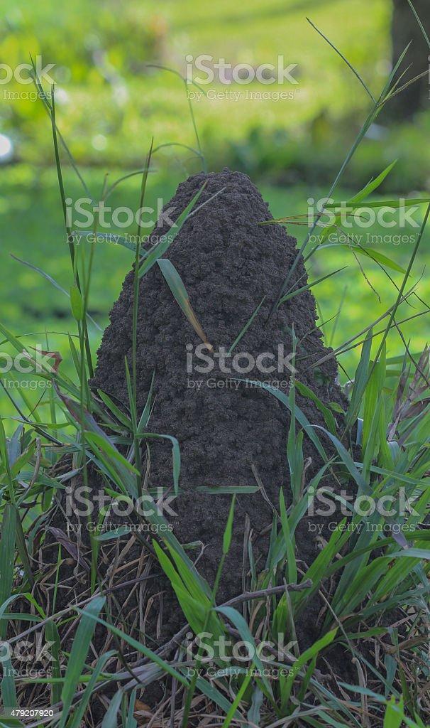 Termite nests on Ground stock photo