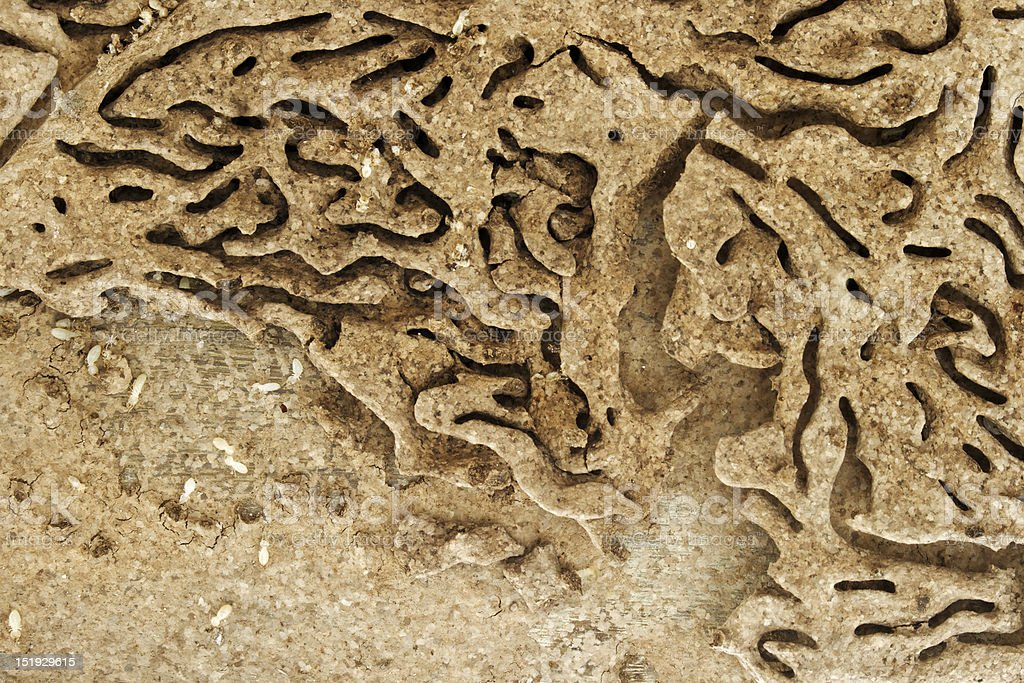 termite trails created landscape royalty-free stock photo
