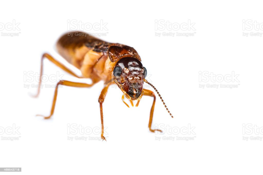 Termite white ant isolated stock photo