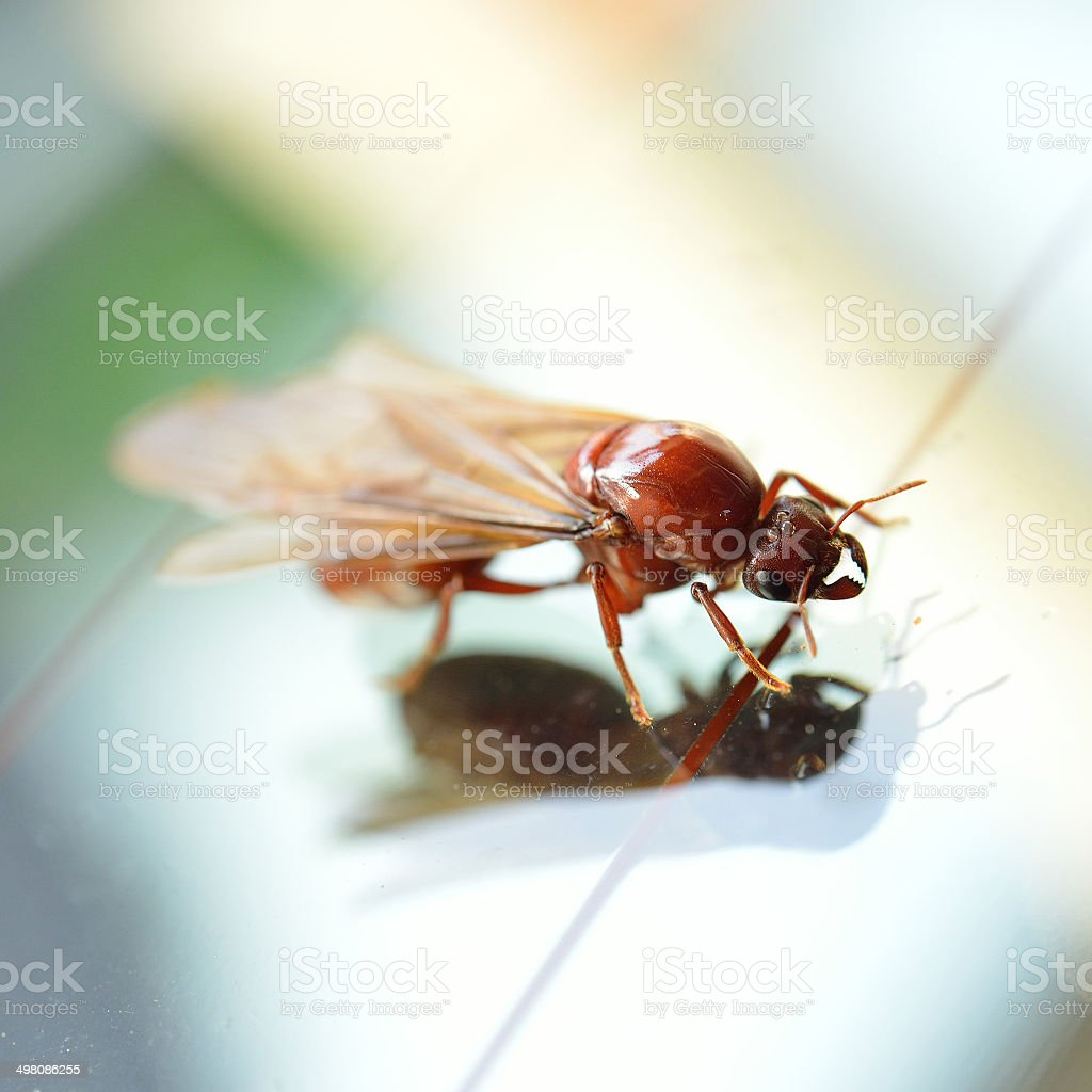 termite white ant stock photo