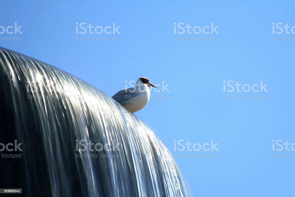 Tern Sitting on a Fountain in Oslo royalty-free stock photo