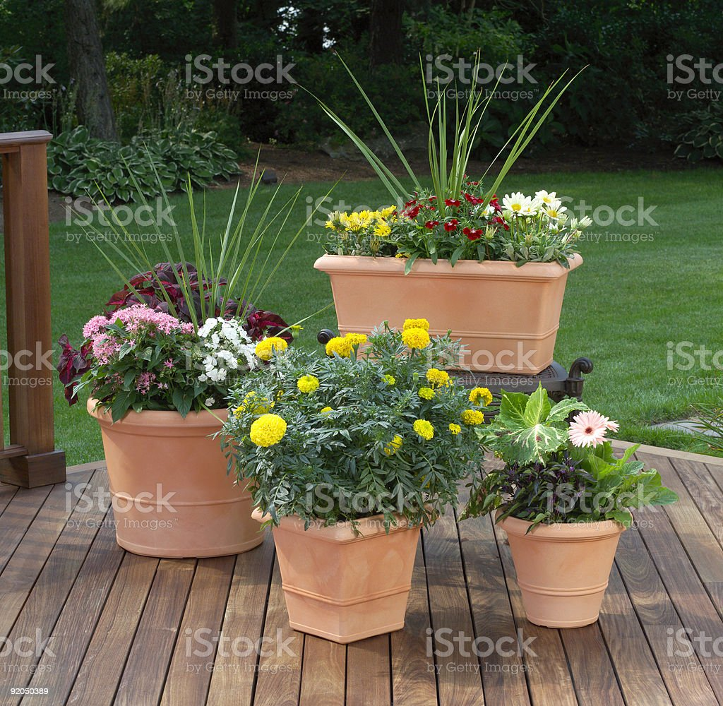Terra cotta outdoor patio flower planters on wood deck royalty-free stock photo