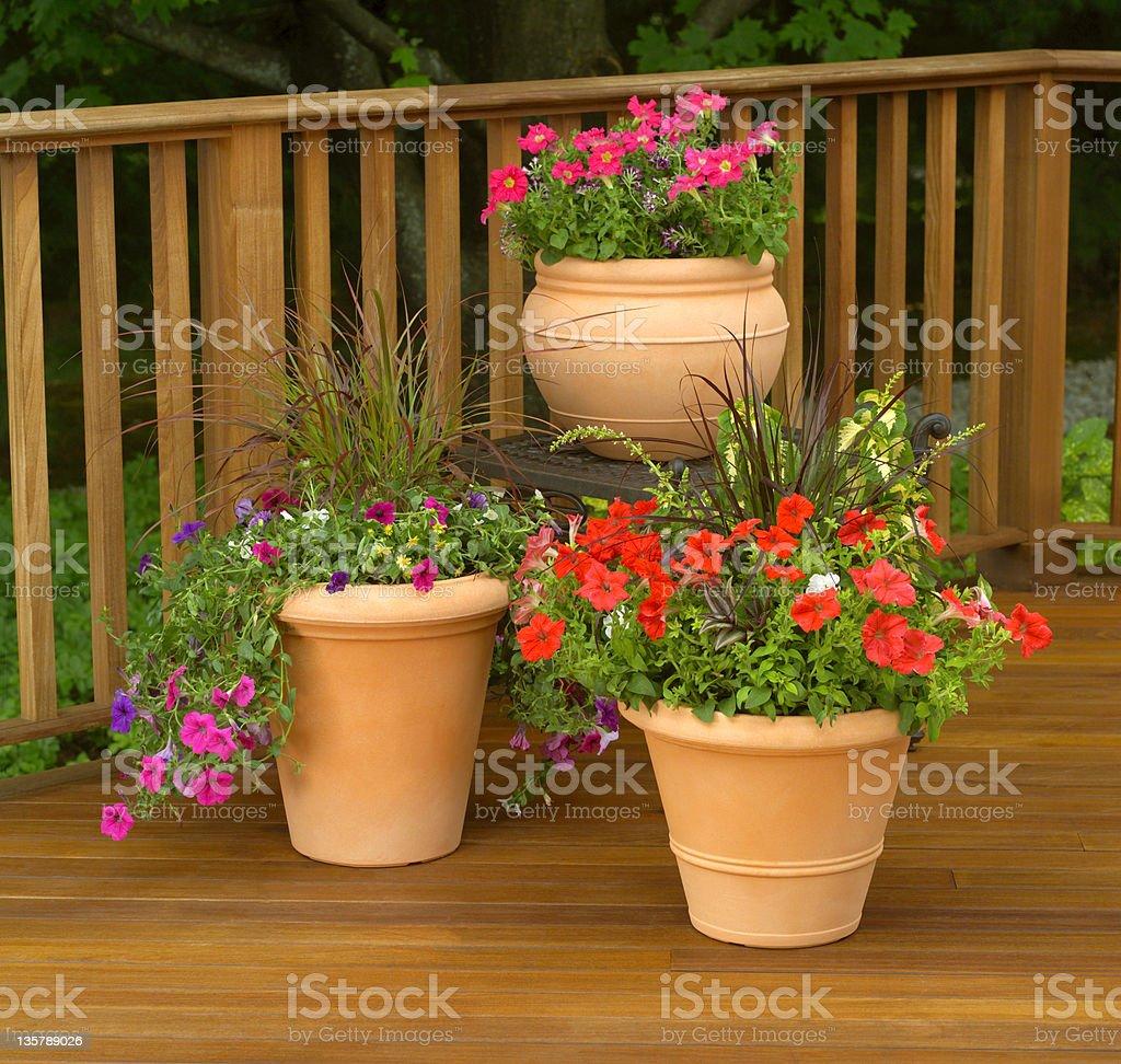 Terra cotta planters on deck stock photo