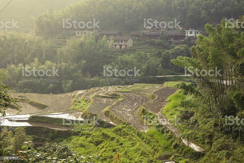 terrace field stock photo