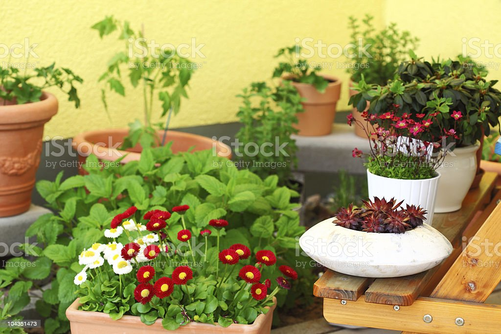 Terrace or roof gardening royalty-free stock photo